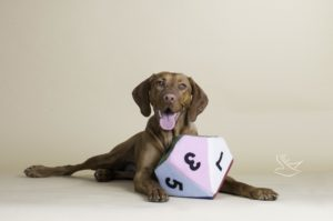 Hunde OP-Versicherung für Magyar Vizsla Welpen?